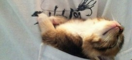 Ce chaton fait sa sieste à un endroit original !