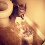 chats jouant avec du PQ