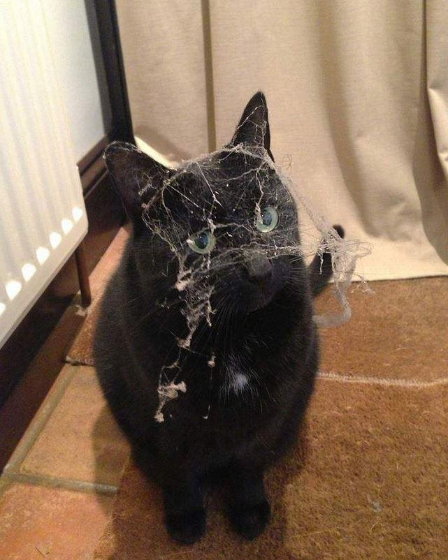un chat couvert de toile d'araignée