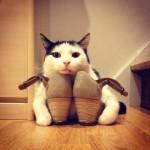 un chat garde farouchement les chaussures de sa maitresse
