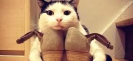 Un chat garde farouchement les chaussures de sa maîtresse