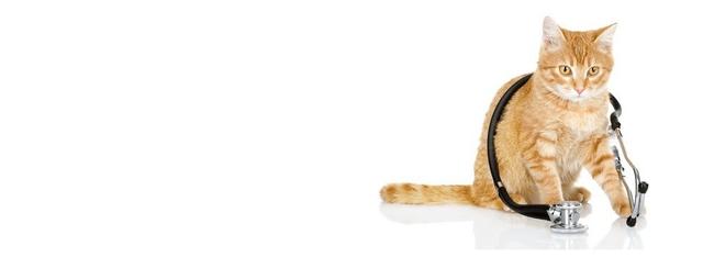 Mutuelle santé pour chats et chiens