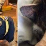 chat déguisé en policier