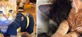 Un chat cherche secours au commissariat et se retrouve enrôlé dans la brigade