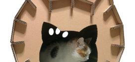 Quels sont les meilleurs équipements pour rendre un chat heureux?