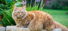 Le plus vieux chat du monde vient de mourir :(